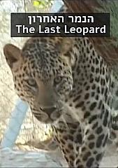 Watch Full Movie - The Last Leopard